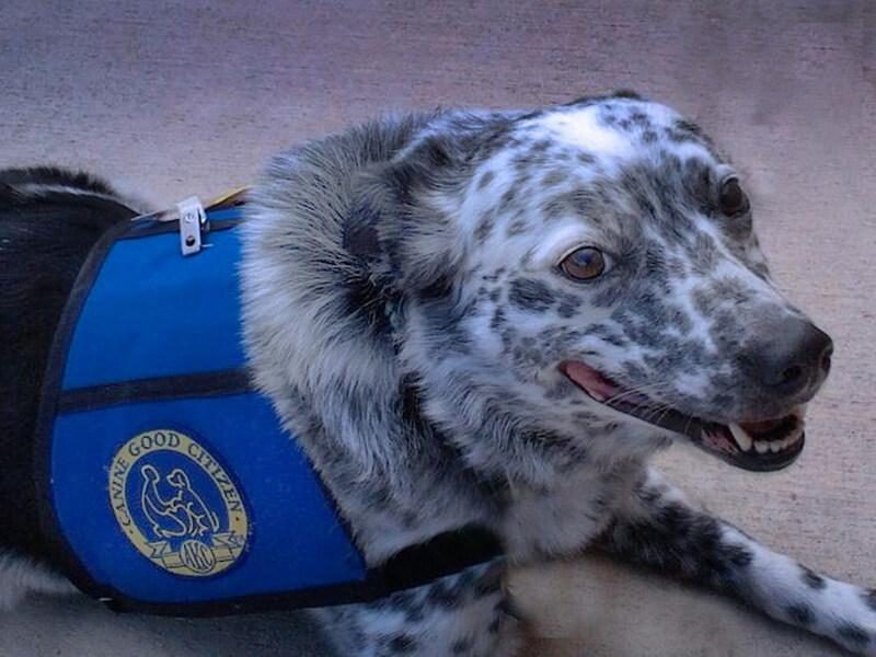 Lucky Puppy Of The Week Freckles The Queensland Blue Heeler Mix