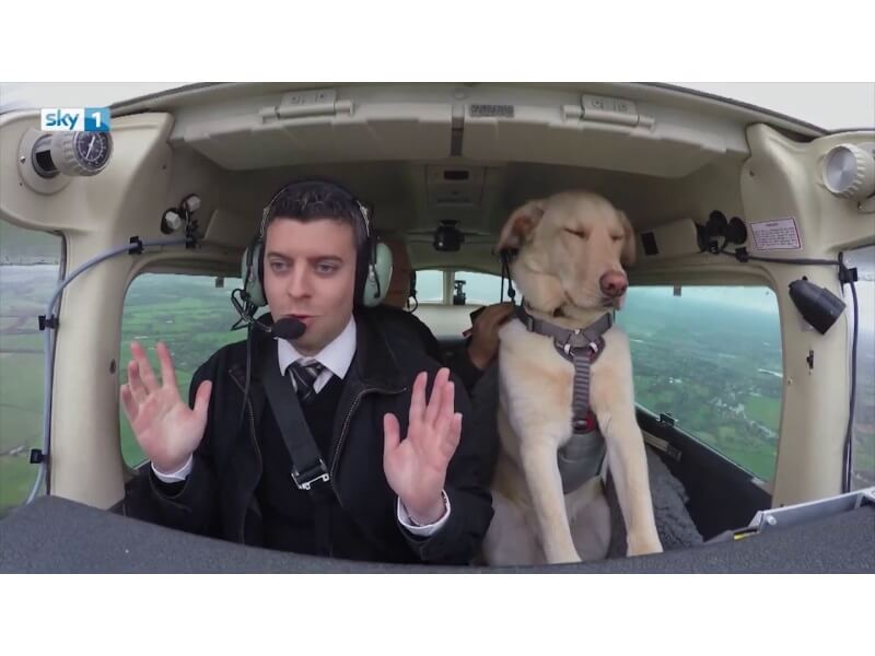 Can Therapy Dogs Fly On Planes
