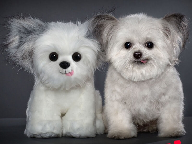 Norbert Therapy Dog Plush Toy